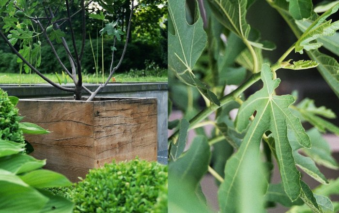 vasari bac à plantes
